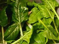 Picture of Spinach 250g (Own Grown)