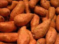 Picture of Sweet Potatoes (Spain)