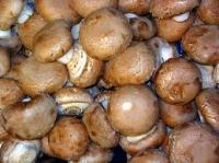 Picture of Mushrooms Chestnut (UK)